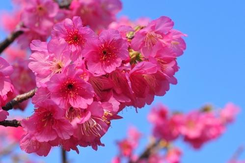 出典:http://ishigantou.cocolog-nifty.com/blog/2011/02/post-861b.html