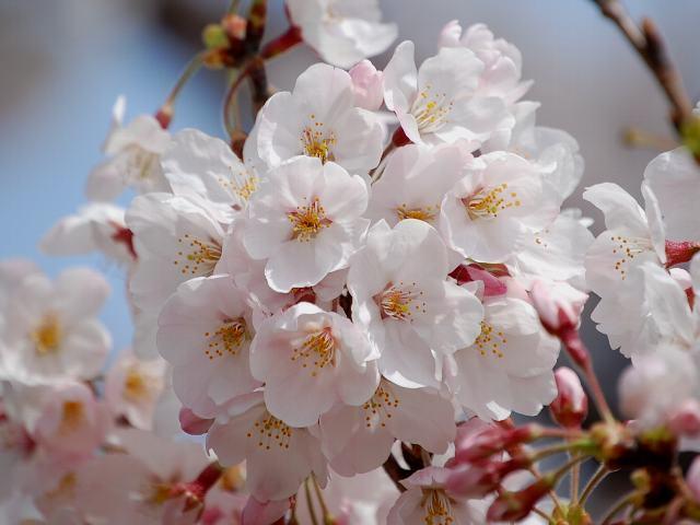 出典:http://shokubutsu-zukan.net/blogs/kyohana/