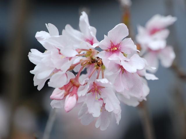 出典:http://kyonohana.sakura.ne.jp/blogs/kyohana/