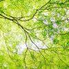 5月の別名・旧暦名「皐月(さつき)」の意味と由来、時候の挨拶・風物詩